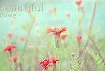 my flowers / flowers from my garden  -  I ♥ FLOWERS