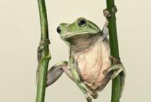 I love Frog / Frog, Frogs, rana, ranas, fotografías de ranas, photo frog. frog shot, picture frog