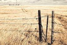 Fence Shot / fences, vallas,