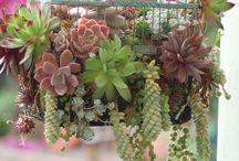 Garden: Succulents / by Dodie Bulatao