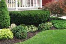 (HOME)Garden/yard space / by Michelle P