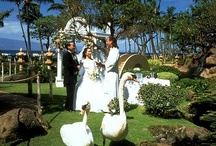Wedding Ideas / An assortment of creative ideas for different types of weddings