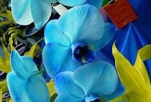 floral / by Michelle P