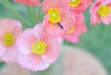 verbena flower farm / Verbena Flower Farm Roseville, CA / Farmer Florists / Growing flowers for your wedding