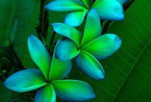 Flowers & Plants / flowers/design & decorating ideas / by Citrine Rain