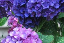 floral & plant design / flower design  / by Citrine Rain