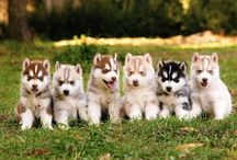 Puppies, Kittens, and Piglets. OH MY! / by Kathy Penn