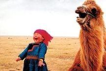 Funny ha ha / by Tricia Janzen