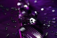 Color My World, Purple