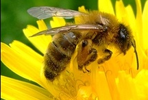 Bee Keeping, Honey & Wax / Everything you want to know about Bee Keeping and using the honey and wax they make for natural candles, soaps, lotions, lip balm and more.