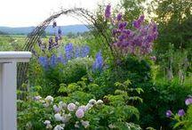 garden / by Susan Ator