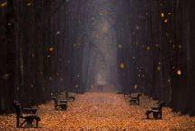 Wonder of Nature / by Samantha Knittel