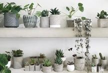 Gardening for small spaces / For those living in flats and apartments with no access to a garden or yard, these ideas will help you find a way to be green fingered. From window boxes to herb gardens, hanging plants to succulents this lovely selection of plants, flowers and herbs will help bring a little greenery and spring joy into even the most urban surroundings.
