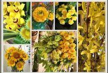 flores / Cuidados de las flores, colores de las flores, variedades de flores, estilos #flores