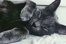 Cats / by Antonia Lagos♥