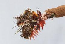 Autumn: #EmbracingTheSeasons