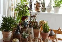 Green things: indoors / House plants, indoor gardens,  flowers, and wonderful potted things.