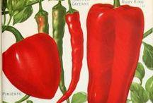Sweet Peppers / by Cartita Design * Caroline Bonne-Müller