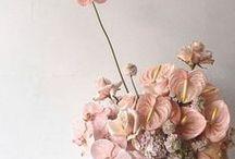 Blush + Bloom