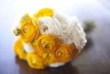 Ranunculus / by Monica