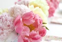 Peonies / by Monica