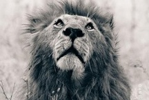 Leo <3 / July 30th - Proud Leo x