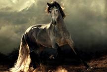 Animals / by Kimberly Ashenden