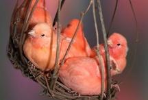 Birds / by Libby Ballard