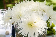 Mums / by Monica