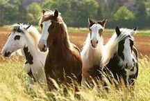 Horses... / by Janice Johnson-Poling
