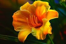 Flowers / by Libby Ballard