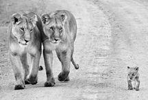 Animals | ❤️