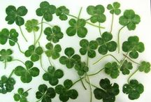 Four Leaf Clovers / I've been finding four leaf clovers everywhere all my life, so that way it has become a symbol that people know me by :)