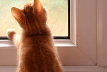 •Cats•
