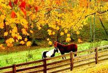 Fall Season!