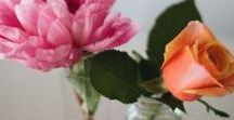 ◽️ FLOWERS . / i. love. flowers. ❤️