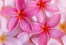 COLOR {pretty in pink} / by NALU TRIBE