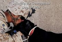 Hero Dogs / Let's not forget our hard working hero dogs.  They aren't just pets, they save lives. Service dogs for veterans and others make life more beautiful and independent every day.