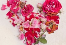 Be My Valentine / All things about February 14 / by Kathleen Palasota