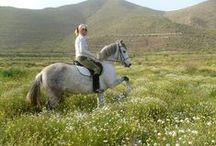 horses, my love my life