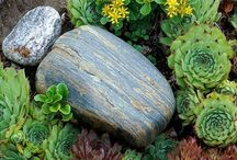 Time For A Green Thumb / Ideas for a better gardening season! / by Karen Dorr