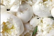 Peonies & Cherry Blossoms / by Leigh Van Niekerk