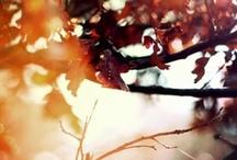 Autumn / by Leigh Van Niekerk
