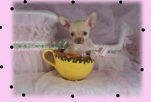 ♥♥♥ SMALL DOGS ♥♥♥ / by María Inés Pinardi