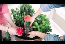 Yard & Garden Videos  / Whether you are brand new to gardening and lawn care or just need a quick refresher, these videos will help you dig, aerate, seed, and water your way to a beautiful yard. / by The Home Depot