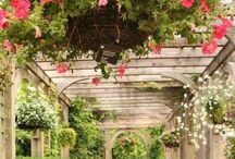 The Secret Garden / by Amber Whitney