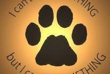 Dog Info/Training