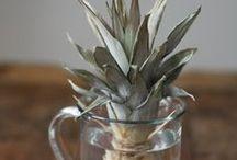 grow / Gardening tips for growing good green plants.