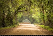 Undiscovered SC  / by Discover South Carolina
