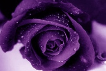 Love the colour purple ......